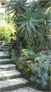 243 best succulents images on pinterest succulents garden