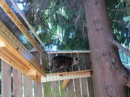 catio spaces patios for cats