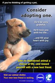 25 best nkla posters images on pinterest animal rescue pet