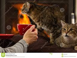 relaxing by fireplace with drink and cat stock photo image 52024966