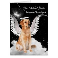 sympathy for loss of dog pet sympathy loss of a dog retriever angel card zazzle
