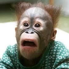 Monkey Meme Generator - shocked monkey blank template imgflip