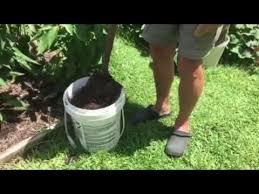 mushroom compost tea youtube