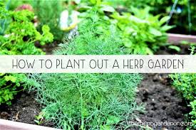herb gardens how to plant out a herb garden the micro gardener