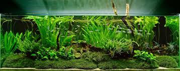 native aquatic plants uk aquarium design group an aquascape with tall aquatic plants and