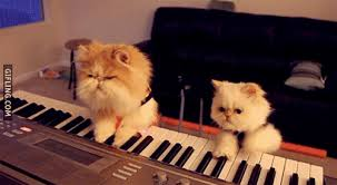 the cat piano gifs get the best gif on giphy