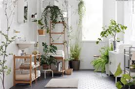 home interior plants 10 indoor plants you can t kill stuck on you
