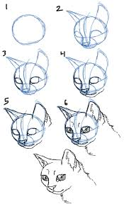 savanna williams how to draw cats faces heads