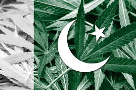 Pakistan Flag Picture Pakistan Flag On Cannabis Background Drug Policy Legalization