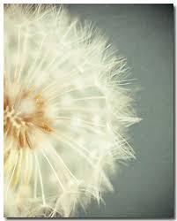 amazon com shabby chic wall art dandelion photograph flower