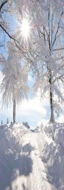 fresh snow fresh snow and winter