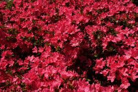 Discount Flowers Discount Wedding Flowers Cheap Wholesale Flowers Bloom Flowers