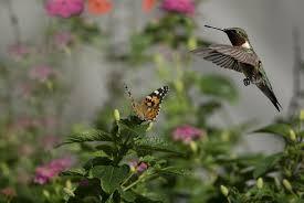 Hummingbird Flowers Flowers Butterflies Birds Hummingbirds Insects Sun Bokeh J