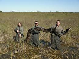 Pythons In Florida Map by Burmese Python Caught In The Everglades