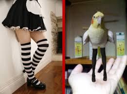 japanese users celebrate knee high socks day with flirty