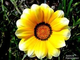 Shades Of Yellow Paint by Shades Of Yellow Paint Free Here