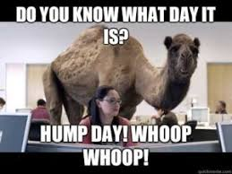 Hump Day Camel Meme - camel hump day meme hump day meme pinterest meme