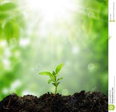 small tree new stock photo image of concept plant 31616392