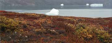 tundra file greenland tundra js 1 jpg wikimedia commons