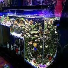 best 25 saltwater aquarium ideas on saltwater