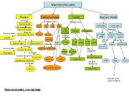 unit four macromolecules the molecules of life biology