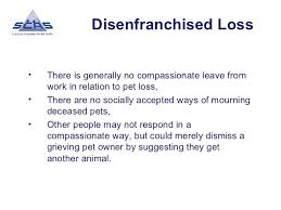 grieving loss of pet pet bereavement support loss and grief