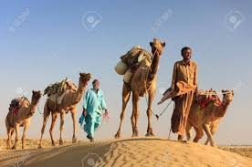 thar desert animals sam india november 28 an unidentified camel man is leading