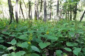 native plants ontario isabella conservation district environmental education program