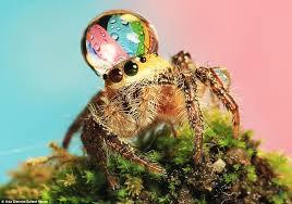 Spider Bro Meme - spider bro loves wearing its king water drop hat