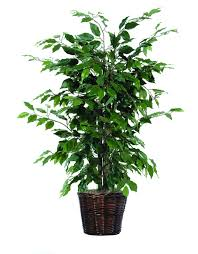 fake trees for home decor silk trees home decor best home style and plans