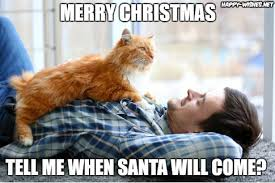 Cat Christmas Memes - 50 best funny christmas memes happy wishes
