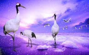 red crowned cranes japan wide is an hd wallpaper posted in animals