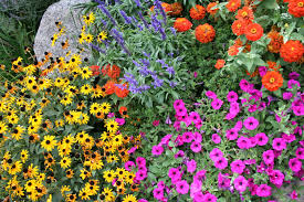 colorado native plants flowers by season in colorado springs timberline landscaping inc