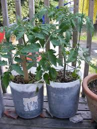 flower gardening 101 container gardening 101 halifax garden network