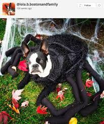 Dog Spider Halloween Costume 24 Adorable Halloween Pet Costumes