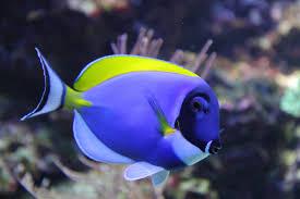Types Of Aquarium Fish Connie U0027s Tropical Fish Is Changing