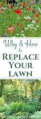 landscape fabric alternatives 1239 best garden best gardening tips and ideas on pinterest