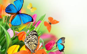butterfly with flowers wallpapers al086b alhuda wallpaper