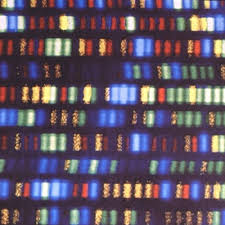 Dna Mapping Your Full Genome Can Be Sequenced And Analyzed For Just 1 000