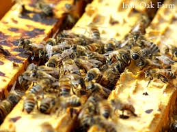 attract bees to your yard with a bee box canadian home work photo