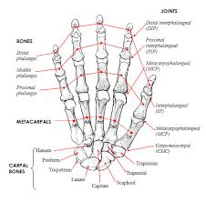 Human Anatomy And Physiology Courses Online Human Anatomy And Physiology Online Course Www Oustormcrowd Com