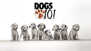 dogs 101 kodi tv show
