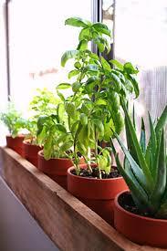 Indoor Herb Pots Window Box - window sill herb garden lemongrass chives peppermint parsley