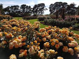 state rose u0026 garden show 2016 melbourne