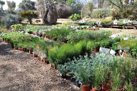 california native plants for sale ucr today plant sale returns to uc riverside