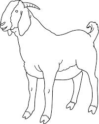 boer goat clip art clipartion com