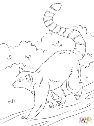 cute ring tailed lemur coloring free printable coloring