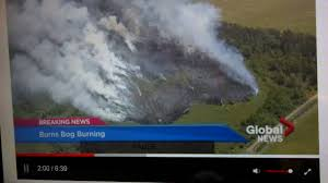 Bc Wildfire Global News by Breaking News Big Fire At Burns Bog Delta Surrey British Columbia