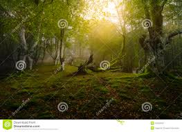 deep forest green deep forest stock photo image 40662587