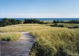 fort pond native plants daniels lane residence u2014 laguardia design group